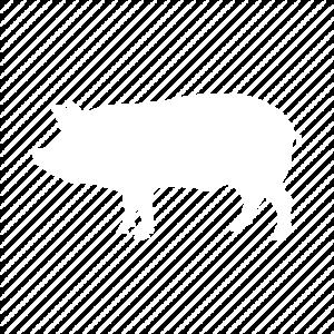 pig-512-copy